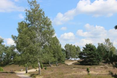 zulassungsstelle landkreis luechow dannenberg wunschkennzeichen